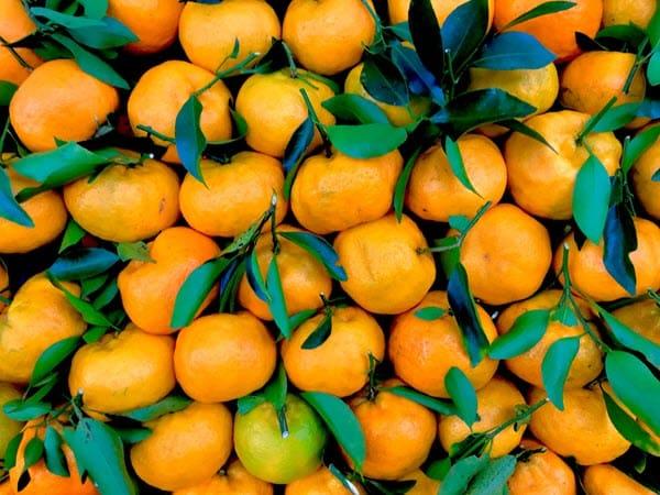 фото мандаринов