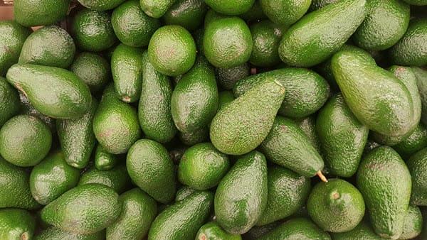 фото урожая авокадо