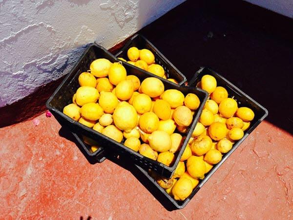 фото лимонов в ящике