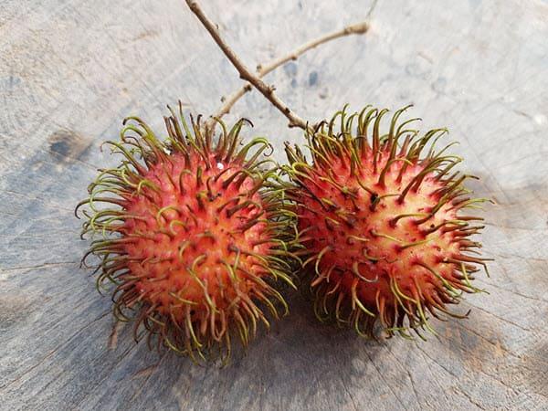фото плодов рамбутана
