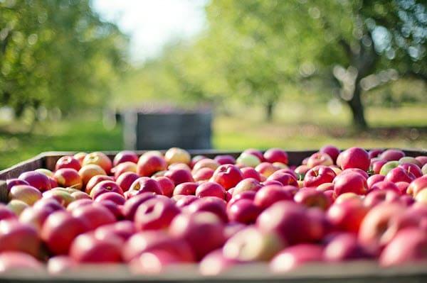 фото яблок в ящике