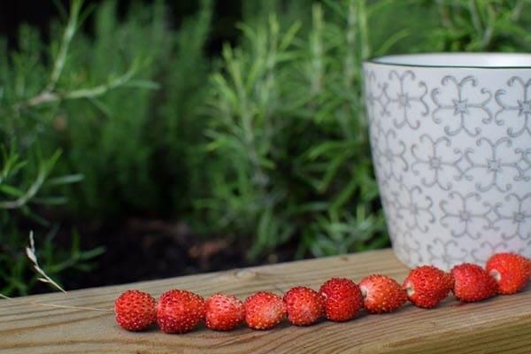 фото ягод земляники