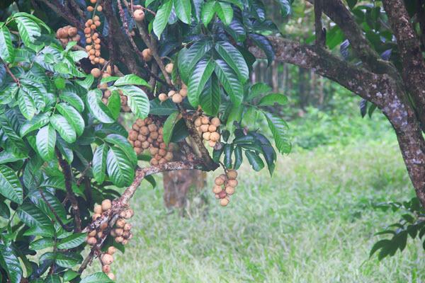 фото дерева с плодами