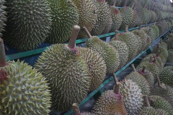 фото плодов дуриана