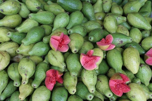 фото плодов гуава