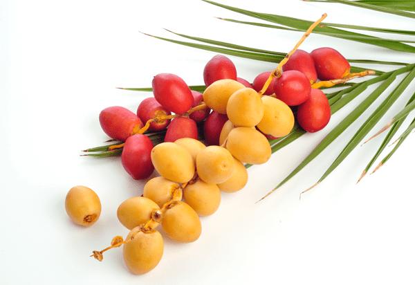 фото свежих плодов фиников
