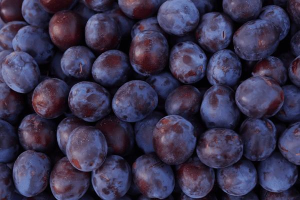 фото плодов сливы