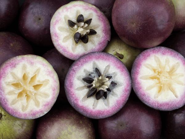 фото фиолетового хризофиллума