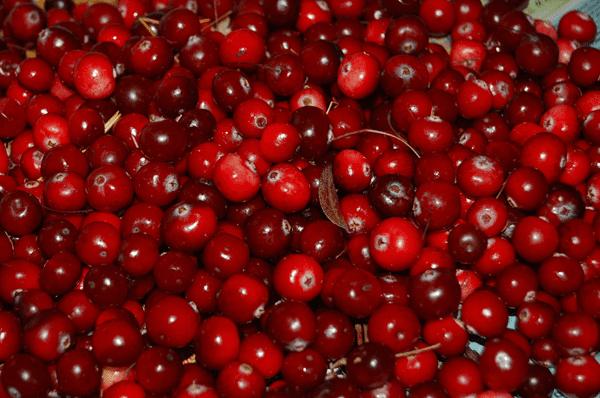 фото ягод клюквы