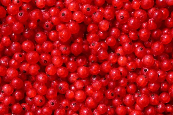 фото плодов красной смородины