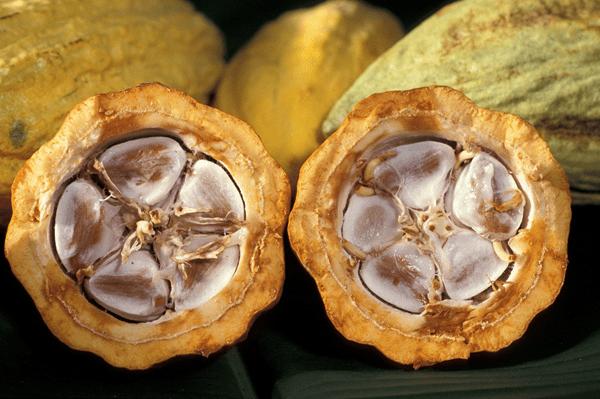 фото половинок какао-бобов
