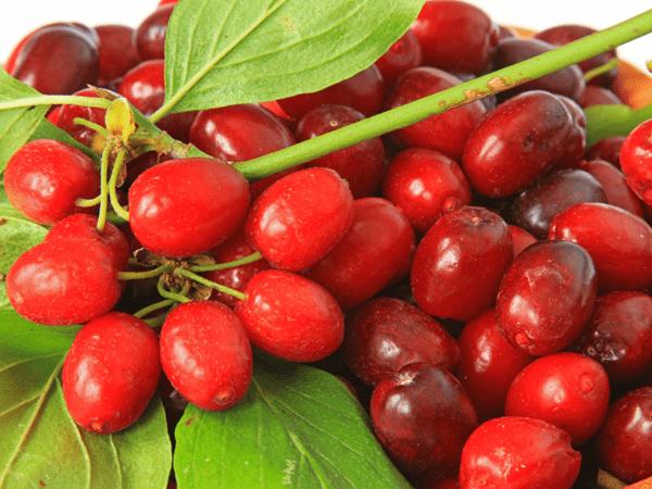 фото ягод кизила с листьями