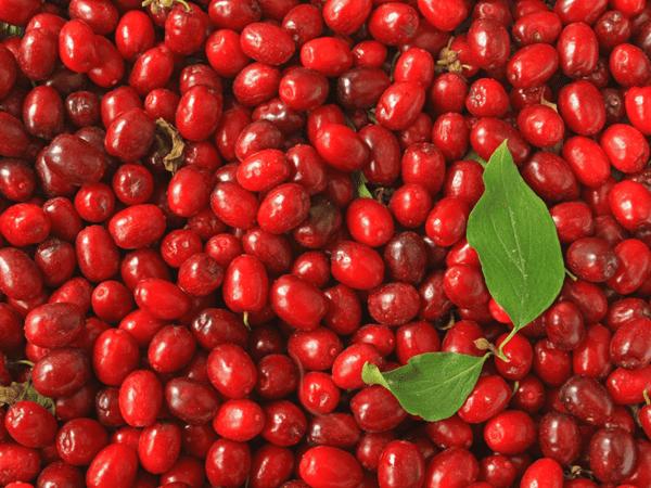 фото ягод кизила