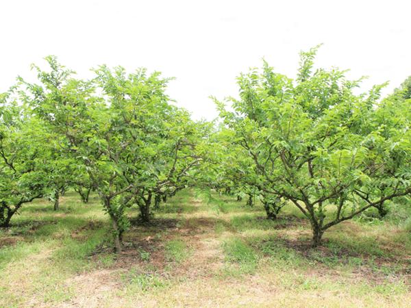 фото сада с деревьями нойны