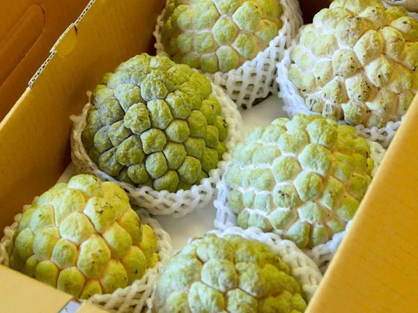 фото готовых к транспортировке плодов нойны