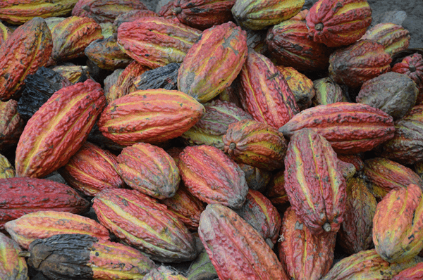 фото какао-бобов на рынке
