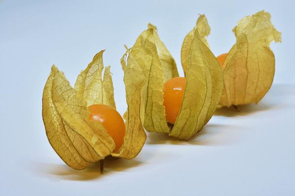 фото 3-х ягод физалиса